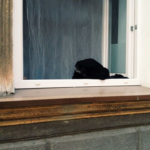Black cat on window sill