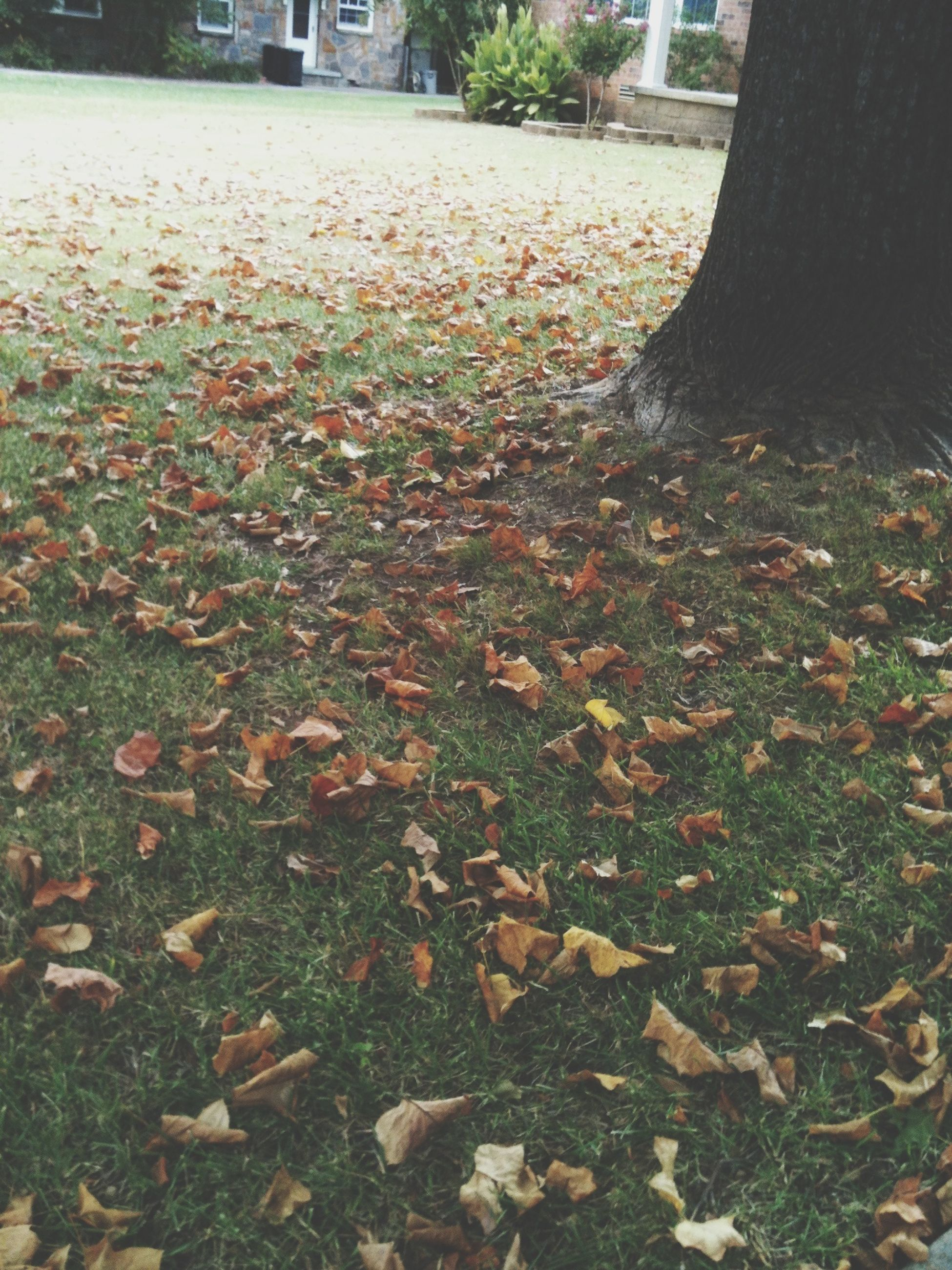 autumn, leaf, change, grass, fallen, season, park - man made space, leaves, nature, dry, growth, falling, tree, day, field, outdoors, plant, footpath, bench, lawn