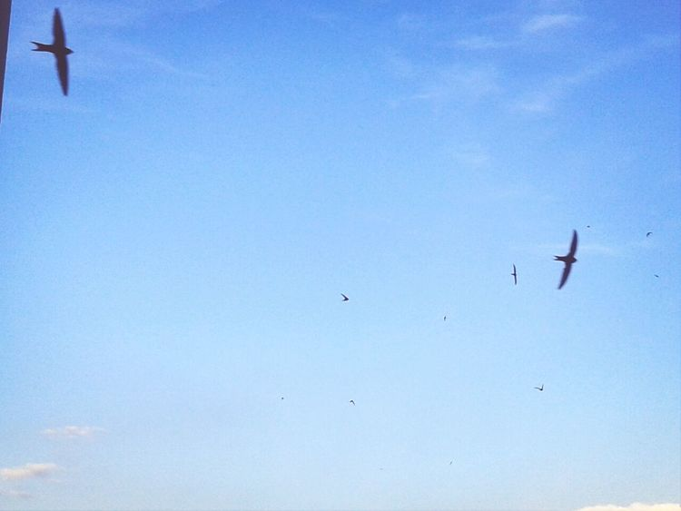 Swallows Sky