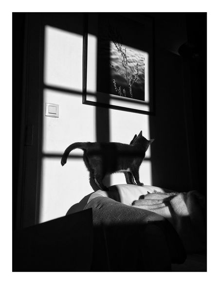 Fenêtre sur ombre Shadows & Lights Shadow Indoors  Animal Animal Themes Mammal Transfer Print Domestic One Animal Pets Cat Domestic Cat