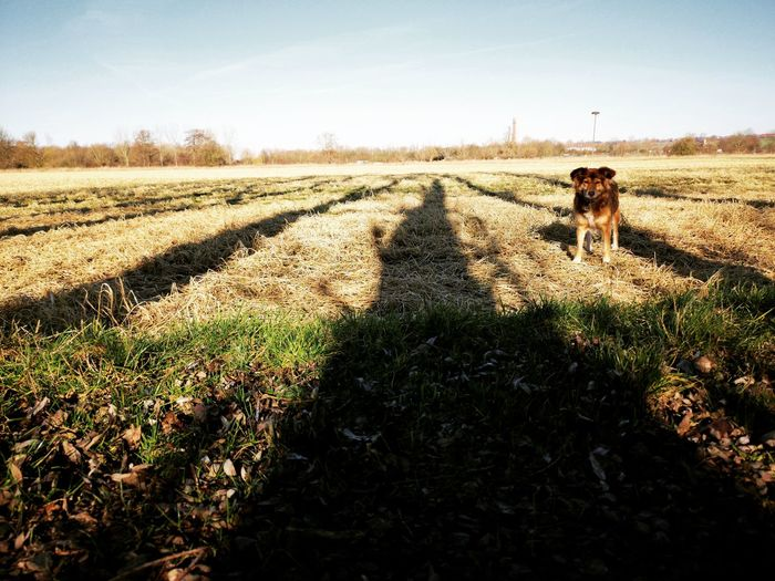 Pets Rural Scene Shadow Dog Agriculture Field Sunlight Sky Farmland Agricultural Field Countryside