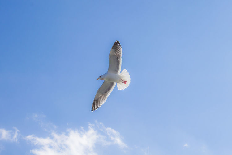 Flying Sky Animals In The Wild Spread Wings Low Angle View Animal Wildlife One Animal Above Outdoors Freedom Day Seagull No People Mid-air Nature Bird Animal Themes Blue Animal