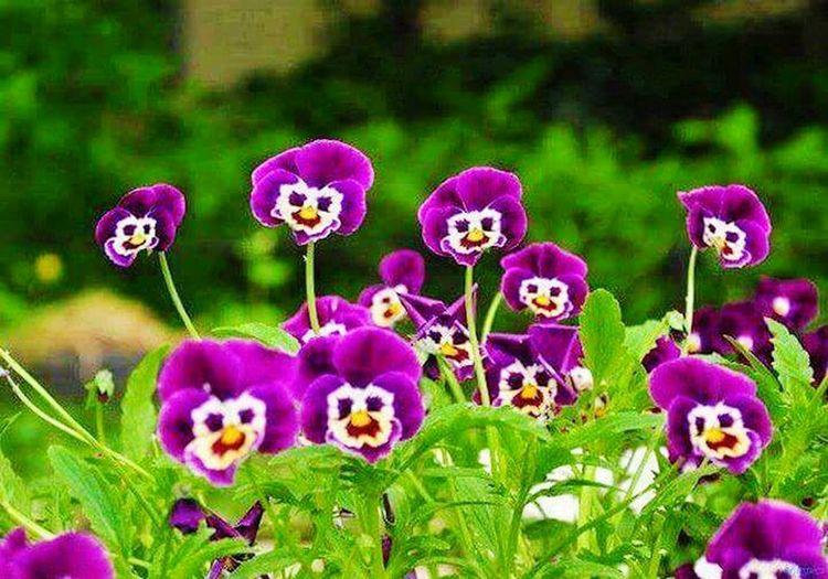 Flowers,Plants & Garden Flowerlovers Smilingflowers EyeEmBestPics Nature Photography