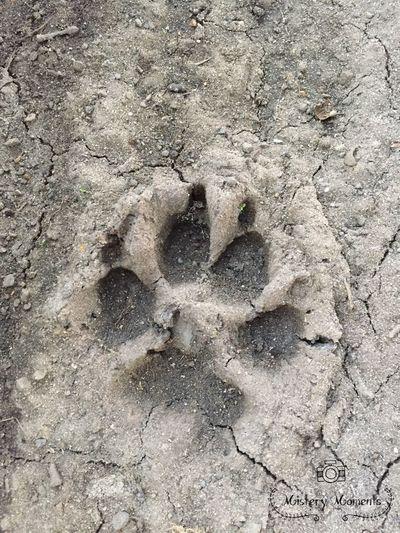 Paw Print Paw Print Paw Prints Sand Animal Mistic Mysterious Mystique Beautiful Summer