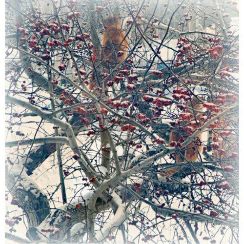 котэ на боярышнике Кисловка Winter Instashot Nocrop