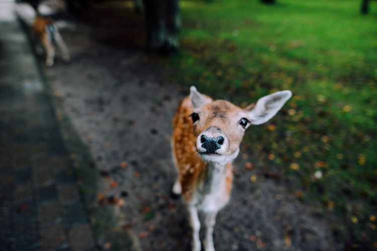 Animal Themes Close-up Cute Day Deer Dots Ears Fluffy Looking At Camera Mammal Nature No People Nose One Animal Outdoors Portrait Road Wild Wild Animal Wildlife
