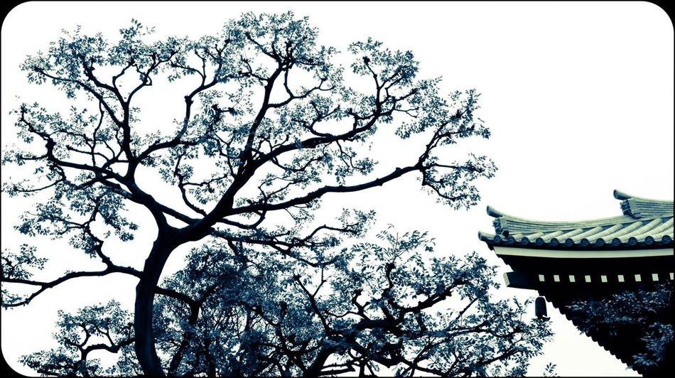 Look Up And Thrive Japan Kioto Tadaa Community Fine Art Photography