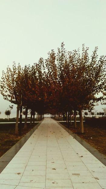 Tree Sky Nature No People Outdoors Day ızmir ❤ Izmirlife Vapur Iskelesi Konak City Life City Beauty In Nature Tree