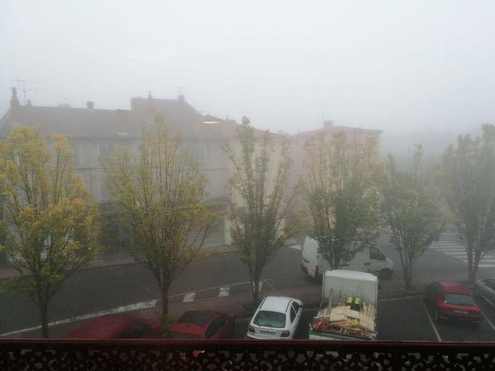 Tree City Fog