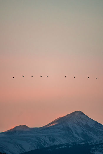 Colorado Boulder Nature Sky Sunset Animal Themes Beauty In Nature Animal Bird Scenics - Nature Vertebrate Group Of Animals Animals In The Wild Mountain Animal Wildlife Flying Large Group Of Animals Tranquility Tranquil Scene No People Orange Color Silhouette Flock Of Birds Snowcapped Mountain