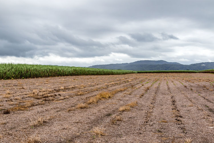 Cane fields with clouds and mountain background Dramatic Sky EyeEm Best Shots Farm Sugar The Great Outdoors - 2017 EyeEm Awards The Week On EyeEm Agriculture Beauty In Nature Cane Cloud - Sky Cultivated Land Day Field Landscape Mountain Nature No People Outdoors Rural Scene Scenics Sky Tranquil Scene Tropical