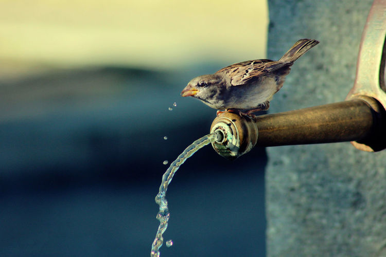 Water is Life. #bird #nature_collection #EyeEmNaturelover #nature #naturelove #Sparrow #water #waterislife Outdoors Live For The Story EyeEmNewHere Live For The Story