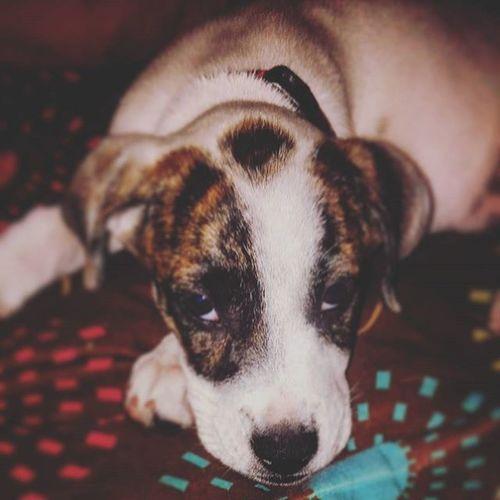 Babybully Ebpups Mansbff Myfurrychild my sweet Amai....i love you! ❤