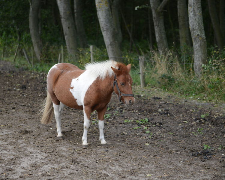 Pony Little Horse Farm Forest Dark Background Animal Farm