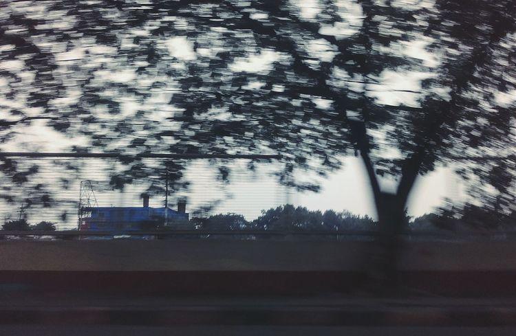 Fast Forward EyeEm Trees Enjoying Life Tree And Sky Exquisite