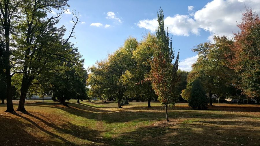 Trees in park against sky during autumn