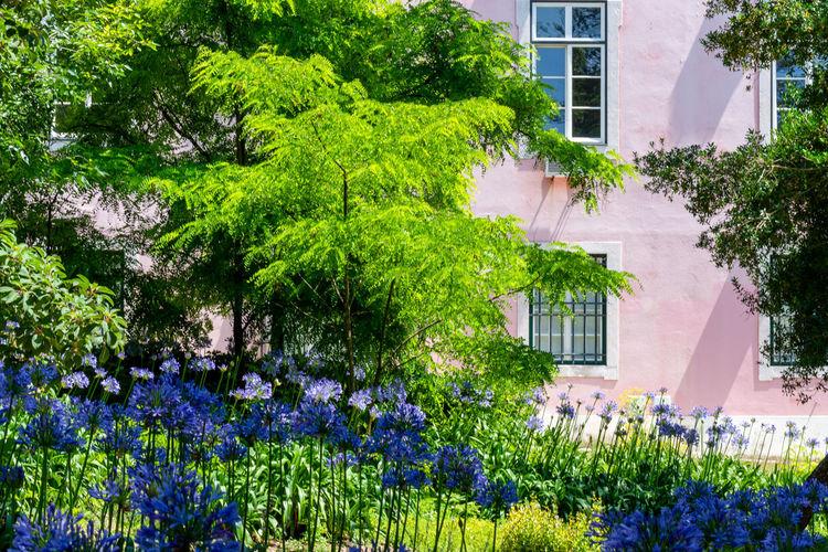 Purple flowering plants and trees in garden
