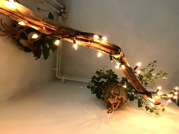 Illuminated Lighting Equipment Low Angle View Night No People Light Bulb Hanging Indoors  Close-up Warmth Home Plant Home Interior Indoors  Tree Wood