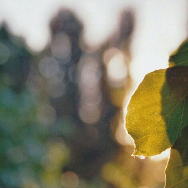 Analogue Photography Analog Münsterplattform Münsterblick Check This Out Plants Green Leaves Komorebi Bokeh