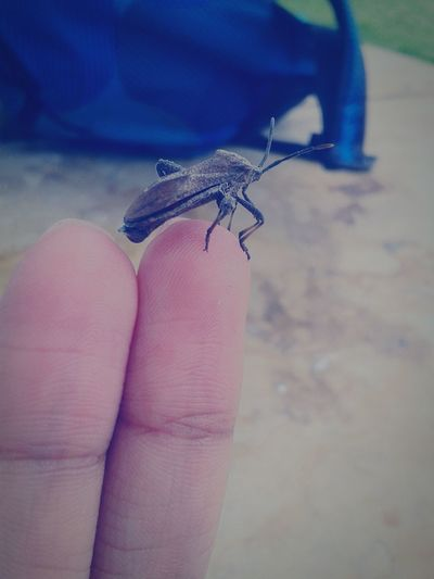 Bang On Target Insect Finger Little World First Eyeem Photo