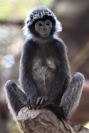Black monkey eye action Monkey Animal Themes Primate Outdoors Nature Animal Wildlife Fotografia Photography Photo Stockphoto Fotografi Stockphotography Zoo Eyeemphotography Portrait Photography Close-up Image
