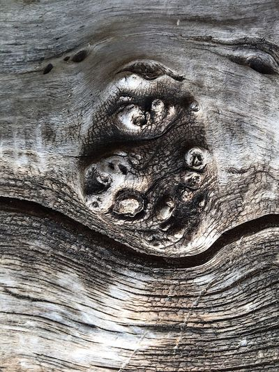 Faces In Nature Textured  Close-up Nature Outdoors Perspective Layers And Textures EyeEm Exploring Cracked Abstract Nature Weathered Driftwood Dead Tree Still Life Scenery Wood - Material Shapes In Nature  Tree I See Faces