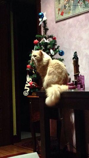 Elvis, vigilando el árbol...