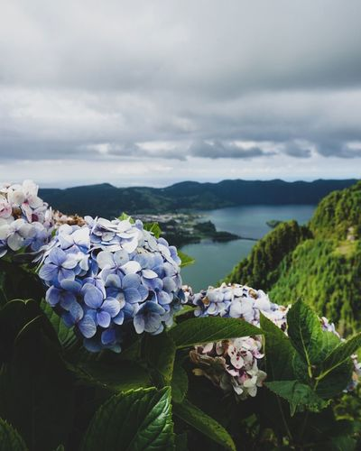 Paradiseonearth Azores Super_azores Saomiguel Saomiguelisland Sonyswitzerland Sonyalphagallery Moody_photography Rsa_vsco Rsa_nature Rsa_outdoors Thewanderco Theoutdoorfolk Outdoorphotography Naturelovers Neverstopexploring  Photography VSCO Roam Exploringtheglobe Birthdayhike Theveganstraightedge Flower Head Water Social Issues Sky Close-up Landscape Plant Cloud - Sky