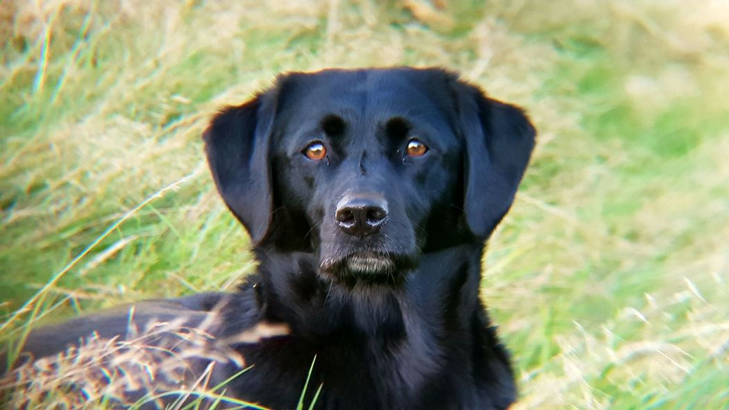 Ollie Dog Black Color Looking At Camera Portrait One Animal Pets Animal