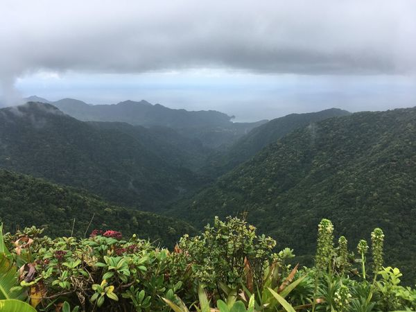 Dominica Agriculture Beauty In Nature Day Freshness Growth Landscape Mountain Mountain Range Nature No People Outdoors Plant Scenics Sky Tranquil Scene Tranquility Tree