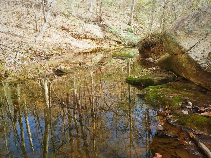 Stream River Tree Rock Reflection Wilderness Nature Afternoon Outdoors Middle Of No Where Shades Of Winter EyeEmNewHere