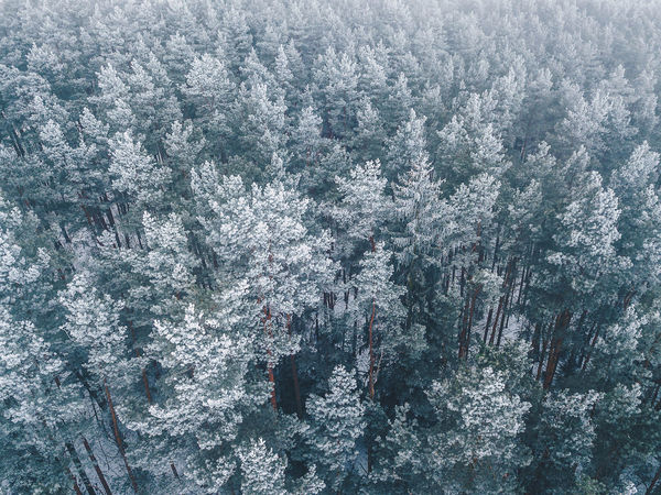 Frosty trees Drone  Trees Winter Backgrounds Beauty In Nature Close-up Cold Cold Temperature Day Frosty Mornings Frosty Trees Full Frame Mountain Nature No People Outdoors Scenics Snow Tree White Winter