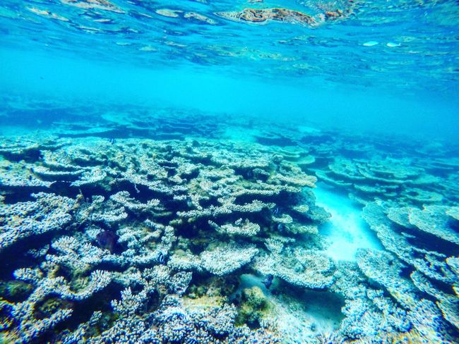 Reef Sea UnderSea Blue Beauty In Nature Ocean Floor Ecosystem  Lagoon Sea Life Seascape Photography Coral Fish