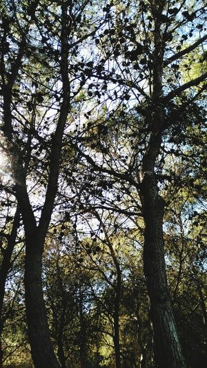 Tree Low Angle View Growth Day Tree Trunk Branch Nature Forest Outdoors Beauty In Nature No People Tranquility Sky