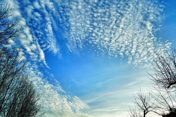 Guten morgen good morning. Blue Sky No People Nature Cloud - Sky Beauty In Nature Close-up Day Cold Temperature Abstract Eyeem0711 EyeEm Best Shots Taking Photos First Eyeem Photo EyeEm Nature Nature Photography EyeEm Nature Lover EyeEm Gallery Outdoors outdoors Scenics Backgrounds Tree