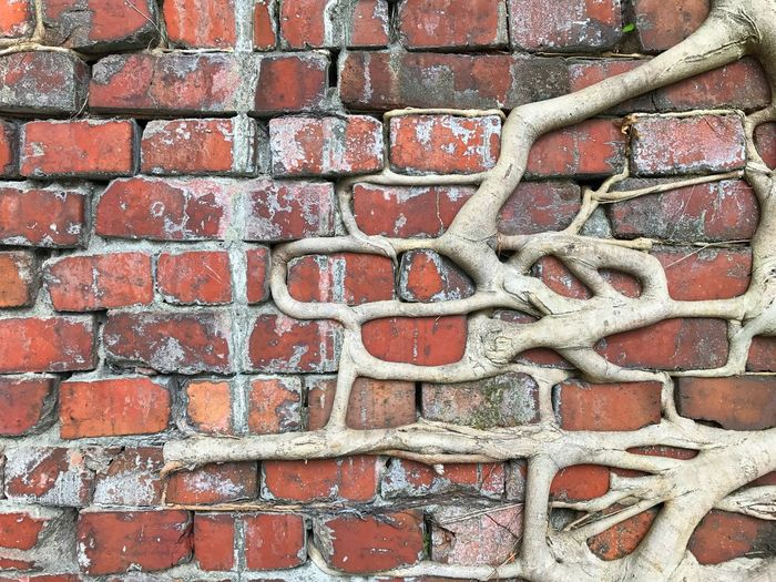 Adapted To The City Banyan Tree Roots Tree Bricks Brick Wall No People Outdoors Built Structure Backgrounds Close-up Roots Break The Mold