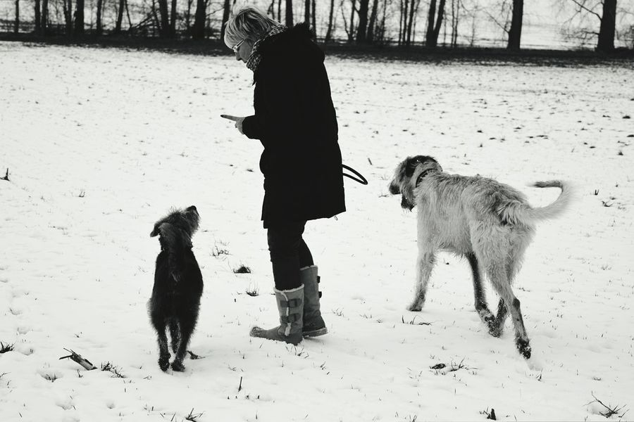 Blackandwhite Monochrome Cearnaigh Irish Wolfhound Dogslife Dogs Of EyeEm Dog Of The Day Dogwalk Dogs Of Winter Playing Pets Domestic Animals Friendship Togetherness People Outdoors Wartberg Winter 2017 How's The Weather Today? January 2017 Cold Temperature Winter People Walking  People Photography People And Places