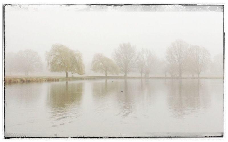 Bushy Park Winter Mist