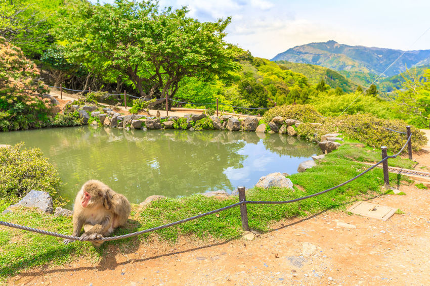 Kyoto, Japan : visitors atop of popular touristic attraction Iwatayama Monkey Park in Arashiyama. People admiring spectacular skyline of Kyoto, Japan. Leisure and tourism concept. Young happy woman eating at Japanese macaque inside popular Iwatayama Monkey Park in Arashiyama, Kyoto, Japan. Tourist enjoys interaction with Macaca Fuscata monkey. Leisure and tourism concept. Arashiyama Feeding  Feeding Animals Fun Iwatayama Monkey Park Japan Japanese  Kyoto, Japan Macacos Touristic Tourists Woman Animal Apes Iwatayama Kyoto Kyoto City Kyoto,japan Macaca Macaca Fascicularis Monkey Park Peoplephotography Wildlife