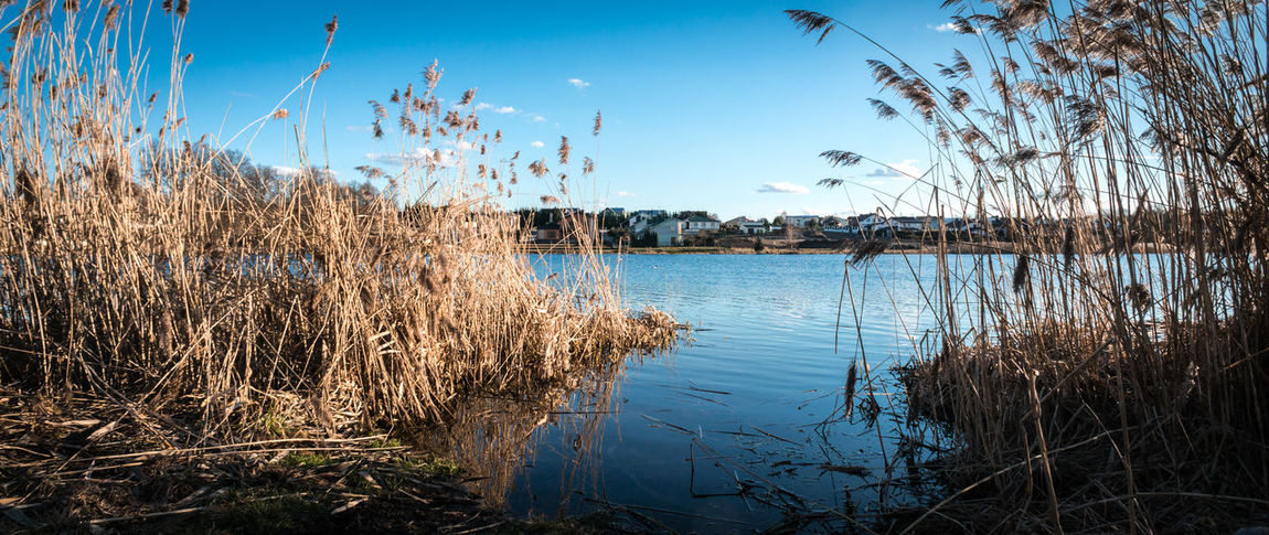 Wide angle, panorama photo of lake in spring - small private houses behind - blue sky and water Beauty In Nature Beauty In Nature Calm Fishing Houses Landscape Living In Nature Nature No People Panorama Peace Plant Private House Reed - Grass Family Relax Rest Rushes Scenics Sky Town Tranquility Village Water Wetland Wide Angle