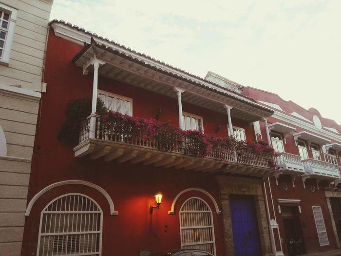 Last Flower Cartagena - Colombia