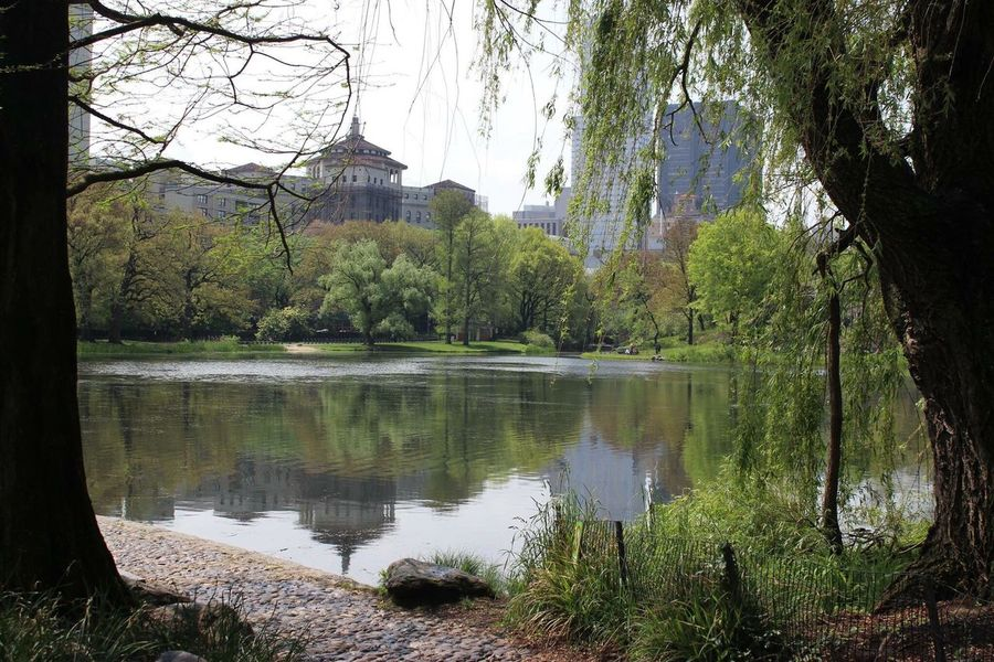 Canon600D Photography Photographer Sunny Bright Park Pond Nature Trees New York Central Park Massive