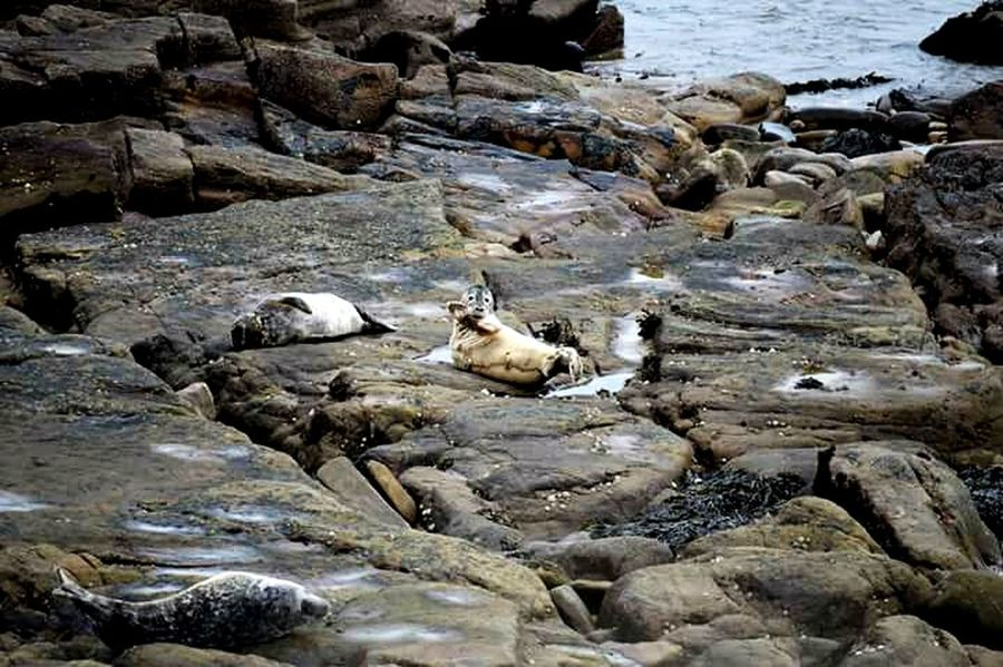 St Marys Lighthouse Whitley Bay Seals