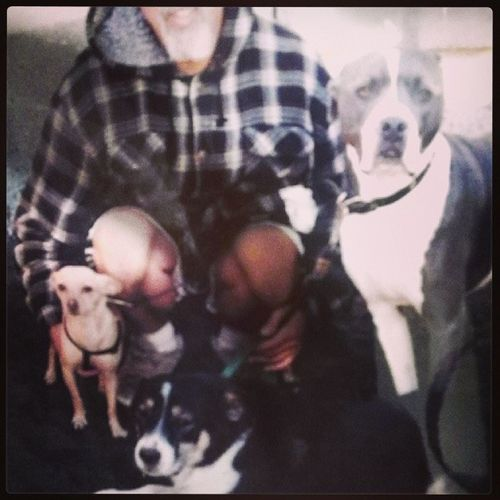 All my boys in one picture. Love at its finest(: Daddyo Puppyboys Maverick Rex belve lovethem irreplaceable