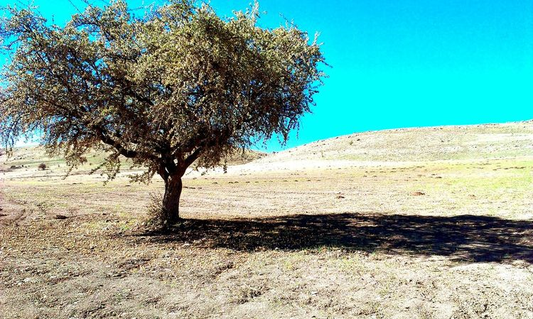 Photogra-tree Hello World Hi! Taking Photos Check This Out Natural Tree Tree And Sky Sky Sky And Clouds