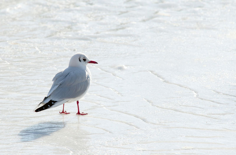 Seagull Perching On Sand At Beach
