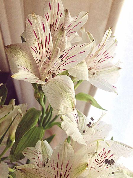 Flowers,Plants & Garden Flowers, Nature And Beauty Flowers :) Flowers Vase Of Flowers Interior Interior Views Interior Design