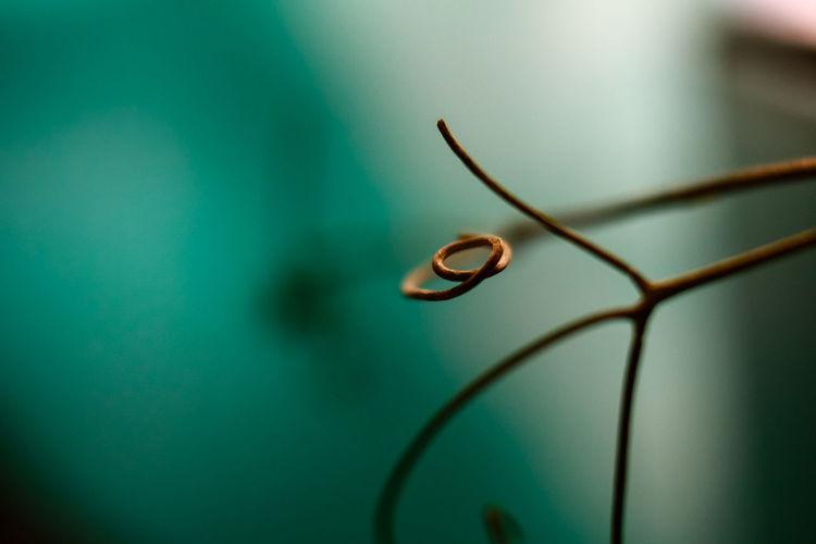 Macro shot of spiral stem