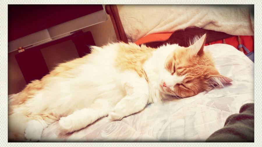 Cat Kitty!  Mycharlie Fluffy