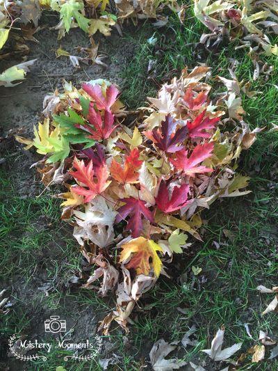 AutumnHeart Heart Autumn Leaves Autumn Colors EyeEm Nature Lover Nature Eye4photography  Hello World Nature Photography Naturelovers